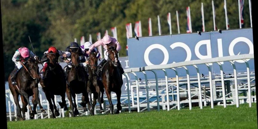 Ascot champions day betting trends quaddie betting systems